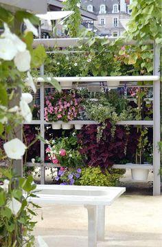 Urban/patio Garden