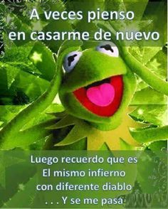 Frog Quotes, Funny Memes, Hilarious, Humor Mexicano, I Survived, Just Relax, Funny Posts, Laughter, Haha