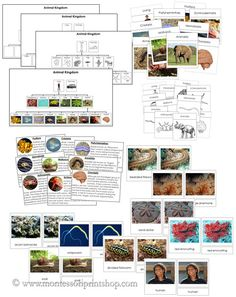 Giveaway - Printable Montessori materials for the Animal Kingdom