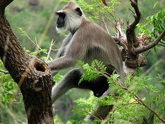 Munnar Eravikulam National Park. Visit the most attractive destinations of Kerala with ABAD hotels Cochin.