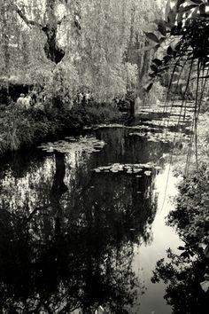 Nympheas Claude Monet Garden, water lilly pond - Elodie Perrier Designs - Blog