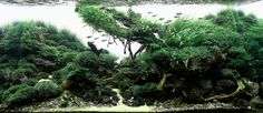 the 2nd Round Grading, TOP 200 Layouts | The International Aquatic Plants Layout Contest, IAPLC