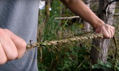 How to Make Rope from Grass
