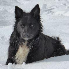 Joe Bear #bordercollie #blackdog #handsomedog #farmlife #sheepdog