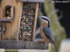 Allergie-Gefahr am Vogelhäuschen - Vorsicht vor Ambrosia-Samen im Winterfutter - https://www.nabu.de/tiere-und-pflanzen/voegel/helfen/vogelfuetterung/07686.html