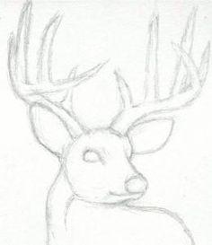 how to draw a deer head, buck, dear head step 3