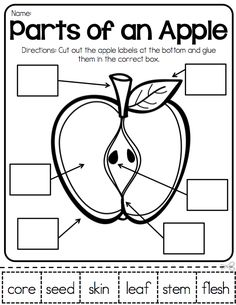 Parts Of An Apple Activities Maybe For Science To Tie In The Johnny Appleseed Theme