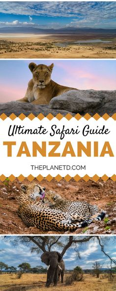 The complete guide to planning the perfect safari experience in Tanzania. From wildlife in the Serengeti to village life in Iraqw, these are the best experiences and guides. Travel in Africa. | Blog by the Planet D #Tanzania #Safari