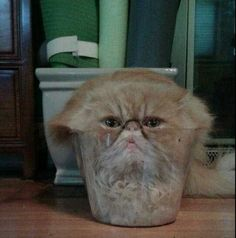 42 Trendy funny pictures of cats kittens hilarious Funny Animal Memes, Cute Funny Animals, Funny Cute, Cute Cats, Top Funny, Super Funny, Animal Quotes, Funny Dogs, Crazy Cat Lady