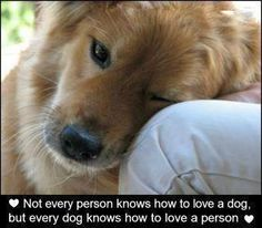 Dogs are God's gift to humanity--especially when they show their undying love for us.