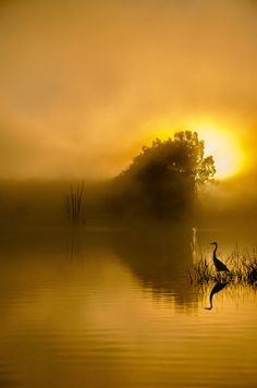 artistic sunrise photo ... foggy wetlands ... egret in grass ...