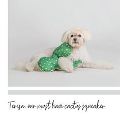 This squeaky soft toy is the perfect choice for pups, small or large. Recycled Fabric, Dog Toys, Cute Dogs, Pup, Recycling, Teddy Bear, Stuffing, Children, Projects