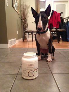 Meet Molly. #Pets love #Nutiva #CoconutOil nutiva.com #Molly #dog