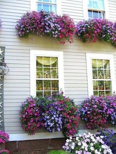 """Awesome window boxes too! Planting the right plants is imperative to get this effect. Looks like """"wave petunias"""" which grown like mad in summer heat. Container Plants, Container Gardening, Succulent Containers, Container Flowers, Plantas Indoor, Small Front Yard Landscaping, Landscaping Ideas, Window Planters, Fall Planters"""