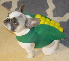 22 Last-Minute Costume Ideas For Lazy Pup Parents