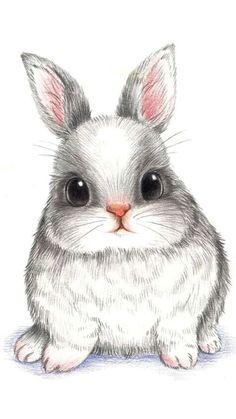 萌 兔 彩 铅 conejos bunny drawing, rabbit drawing и draw Bunny Drawing, Bunny Art, Bunny Pics, Big Bunny, Hunny Bunny, Lapin Art, Cartoon Cartoon, Cartoon Rabbit, Cute Bunny Cartoon