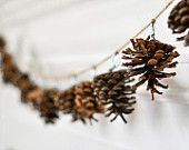 """Pinecone Photograph """"swag""""  5x7 minimal simple white brown natural photography print"""
