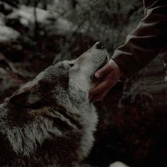 Find images and videos about nature, animal and wolf on We Heart It - the app to get lost in what you love. House Stark, Black Bear, Brown Bear, Twilight, The Ancient Magus Bride, She Wolf, Character Aesthetic, Book Aesthetic, Dnd Characters