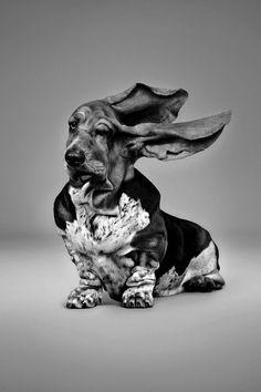 Dog in black & white