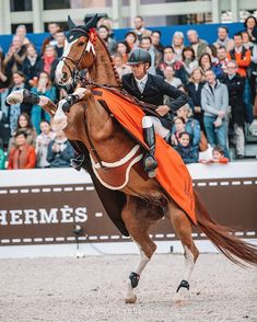 ONDAY 🎉 Thank You HERMÈS & GL events for this unique show 🙌🏼 A victory at the Grand Palais always has a special flavor, something magical, Cute Horses, Pretty Horses, Horse Love, Show Jumping Horses, Show Horses, Horse Riding Clothes, Most Beautiful Horses, Majestic Horse, Horse Trailers