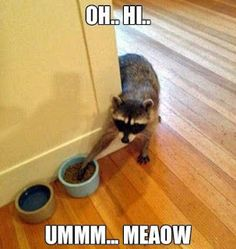 Funny Animal Jokes, Funny Animal Pictures, Cute Funny Animals, Funny Cute, Funny Photos, Animal Pics, Animal Captions, Clean Animal Memes, Cute Animal Humor
