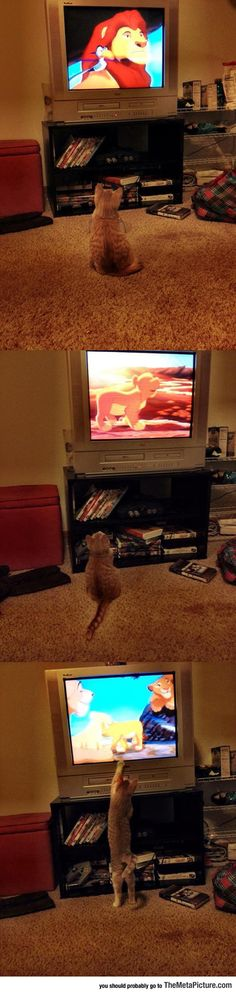 Funny Pictures: Watching The Lion King