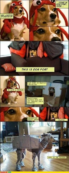 Come in, Dog Fort. Over.