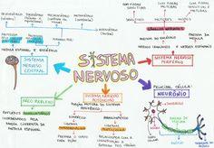 Os principais conceitos sobre Tecido e Sistema Nervoso estão neste mapa mental imperdível! Vestibulandos, preparem-se para o Enem com o melhor conteúdo!