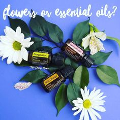 Would you rather receive an $80 bouquet of flowers that will wilt and die after one week or forever flowers in the form of dōTERRA essential oils for Mother's Day?!  The answer seems like an easy one to me when I think about ALL of the life-changing benefits (physical and emotional health) that come from these gifts from the earth!  . Additionally I am offering an amazing deal on all my starter kits this month!  And RIGHT NOW (through Monday) I am making the deal even sweeter for all of my…