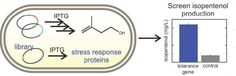 Boosting Biogasoline Production in Microbes