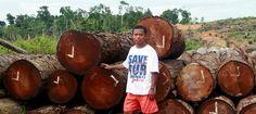 Die mächtige Palmölfirma Bumitama Agri unterliegt vor dem Obersten Gerichtshof Indonesiens – sie hat auf Borneo illegal gerodet und Plantagen angelegt. Für dieses Urteil hatten unsere Partner von Save our Borneo gekämpft. Unterschreiben Sie diese Petition: https://www.regenwald.org/aktion/928/grossartig-teil-sieg-fuer-regenwald-und-orang-utan