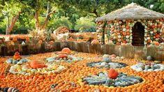 These 10 Charming Pumpkin Patches Around Denver Are Picture Perfect For A Fall Day