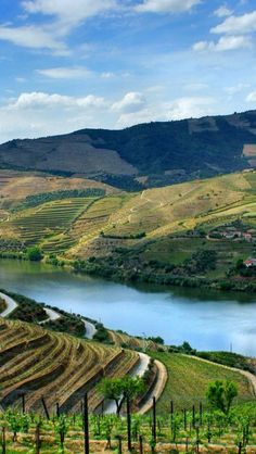 Douro Valley | Port is one of the world's great classic wines. The grapes are grown in the mountainous upper Douro Valley two hours drive inland from Porto. |#Dourovalley #portugal #portoholidays
