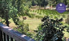 Up to 54% Off Tour Package at Treehouse Vineyards