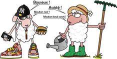 """Mouton noir de la campagne contre mouton """"tout court"""" le consommateur #autonomie #auvert #sudfrance"""