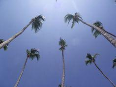 Palms at Marbella, Juan Dolio, Dominican Republic