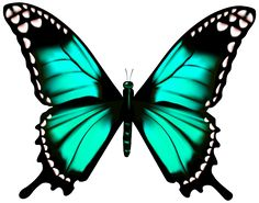 Butterfly Transparent PNG Clip Art Image