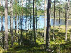 #Rosettjernet. #Mosjømarka. #Løten. #Tjennrunden