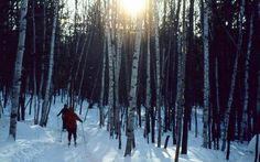 Women snowshoeing through the Vermont woods.