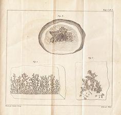 Girardin, Jean Pierre Louis and Lecocq, Henri (1837)