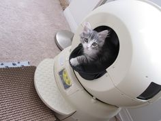 Reclusive Cat Only Leaves Sensory Deprivation Tank Once Per Year
