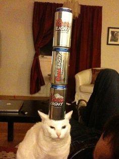 25 chats qui se foutent royalement de ce qui se passe autour d'eux !