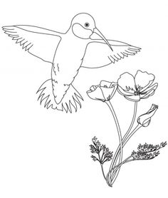 Hummingbird Nest Stock Images, Royalty-Free Images ... |Hummingbird Nest Coloring Page