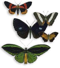 More Flutterbys
