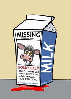 Missing...Bobby Calf