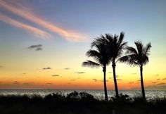 Early light by the beach palms.