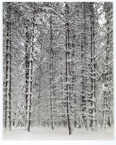 Winter Yosemite Valley, 1933–34 Ansel Adams (American, 1902–1984) Gelatin silver print Alfred Stieglitz Collection, 1949