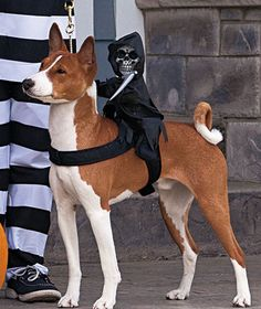 OMG!  Cannot stop smiling or giggling when I look at this.  SO funny!  A must have for the dandy-dressing pet on Halloween.