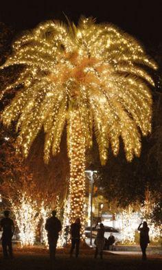 Christmas Palm Tree GIF