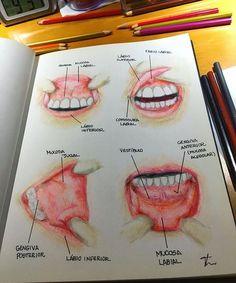 High-pitched Dental Crowns Before And After Smile Dental Assistant Study, Dental Hygiene Student, Dental Art, Dental Humor, Dental Anatomy, Medical Anatomy, Dental Videos, Dental Technician, Medicine Student